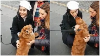 Vanessa Hudgens pets dog while filming Princess Switch