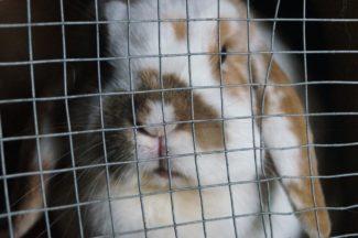 Rabbit in hutch generic.