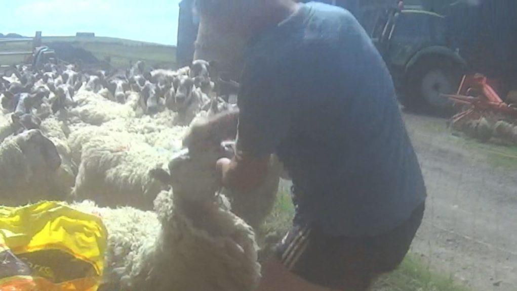 Abusive: Farmer William Brown was fined for his actions.
