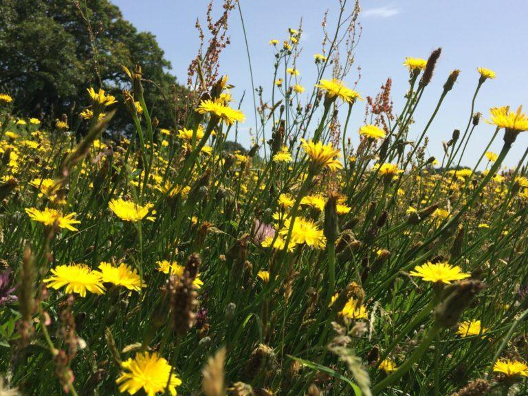 Wildflowers: The data is collected by volunteers.