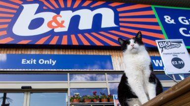 Ollie, B&M cat.