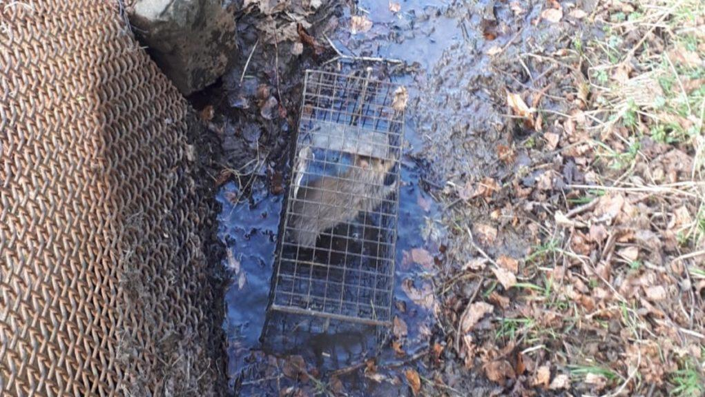 Traps: The Scottish SPCA said it will work with land managers and trap operators.