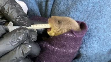 A young otter has her first feed.