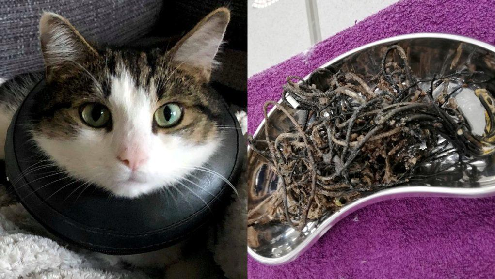 Mischievous: Waffles ate hair bands, string from his toys and yarn from his scratching post.
