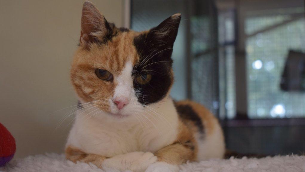 Georgie the cat was found at Loch Lomond.