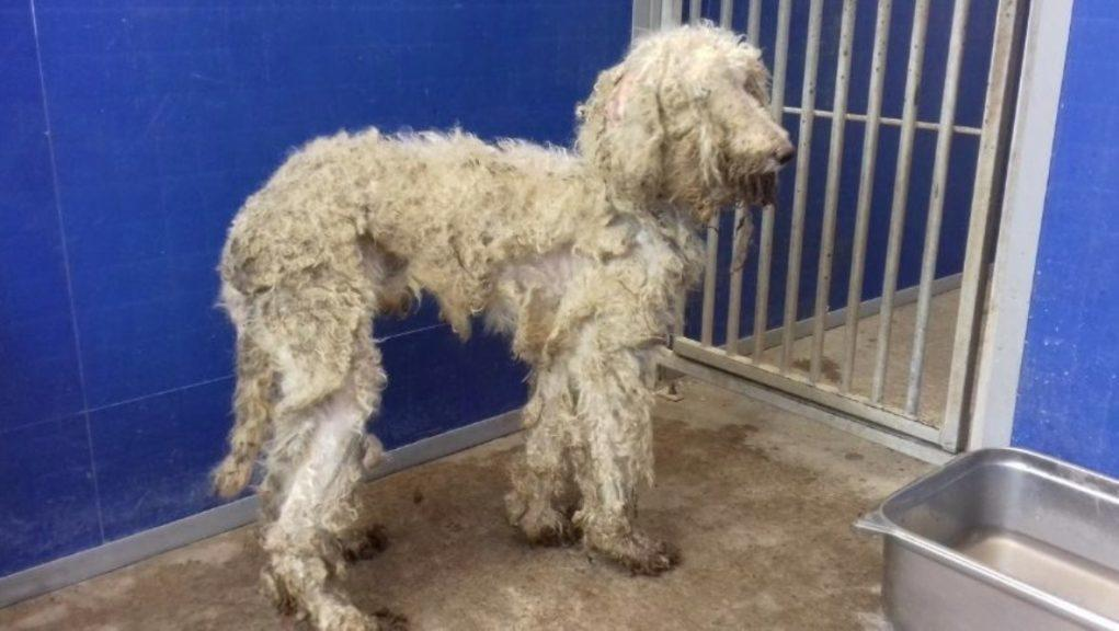 Appeal: Ten dogs were rescued on Saturday.