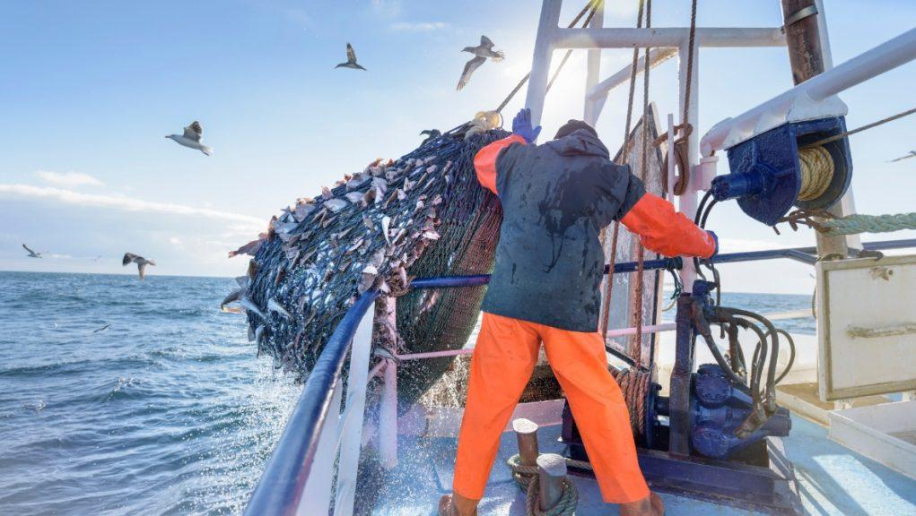 """According to industry body Scotland Food and Drink, exporting seafood to Europe has been """"very challenging""""."""