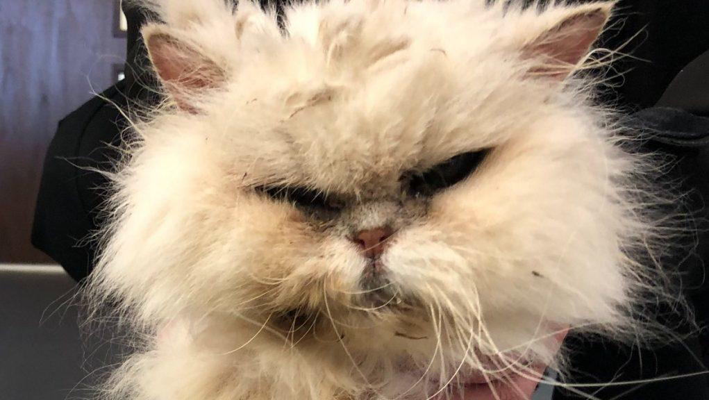 Cat was found inside wheelie bin in Aberdeenshire.