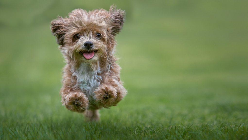 Puppy: Many people have welcomed a new pet into their home since the start of the coronavirus pandemic.