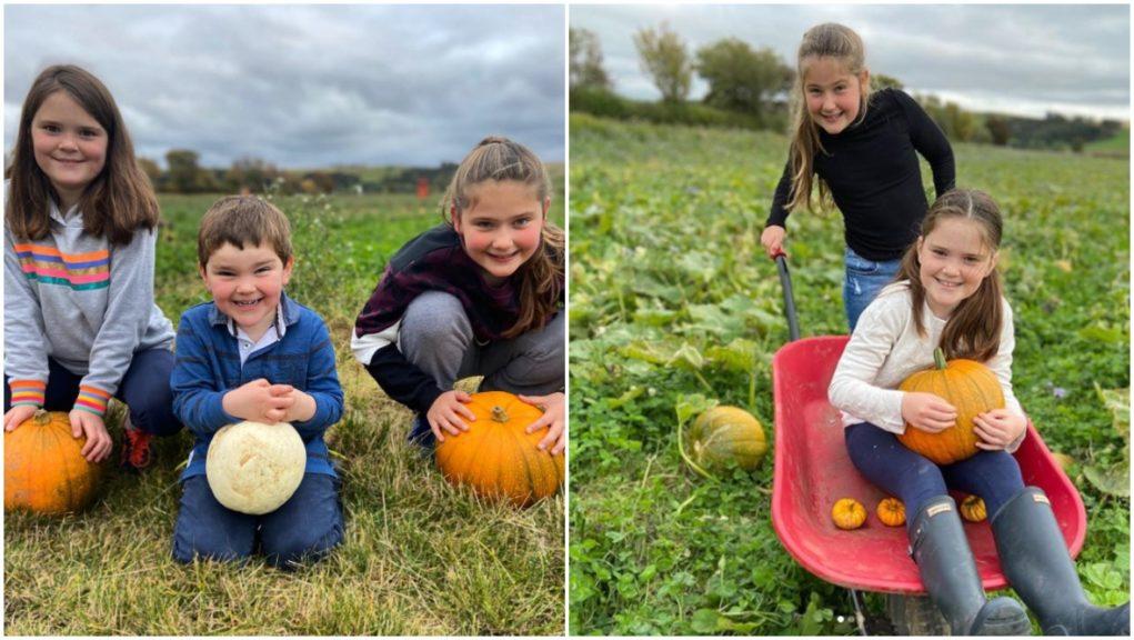 Bumper crop: Family grow 6,000 pumpkins during lockdown.