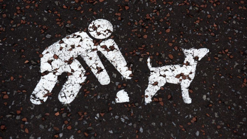 Dog mess: Pick up after your pet.