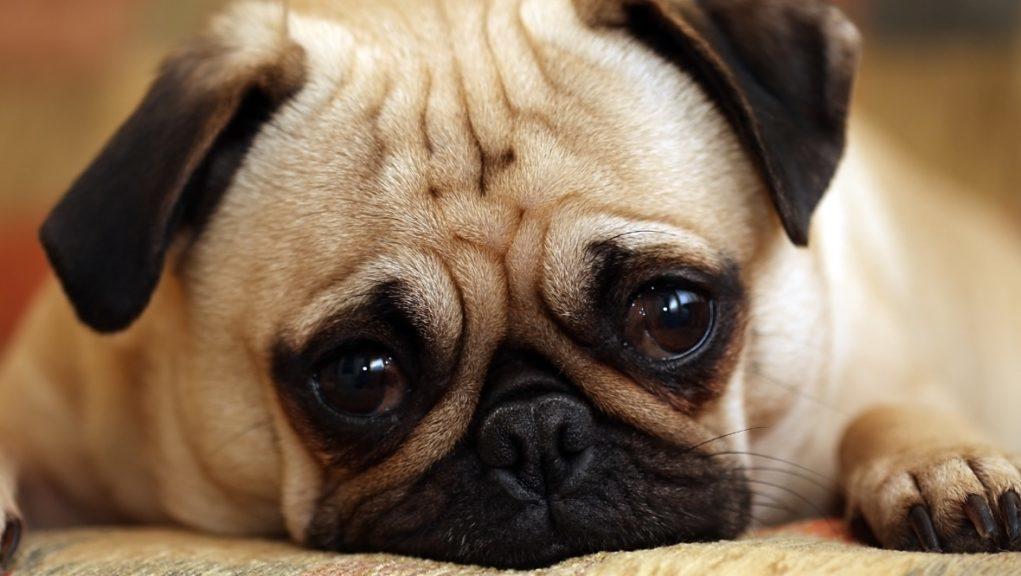 Charity: Scottish SPCA hit capacity as a result of the coronavirus pandemic.