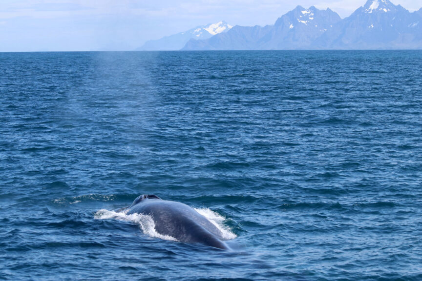 Deaths: Figures show more than a thousand whales, dolphins and porpoises die in fishing gear each year.