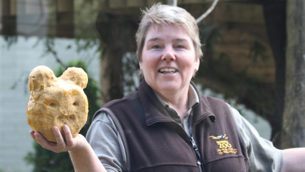 Alison MacLean is looking after the carnivores at Edinburgh Zoo today.