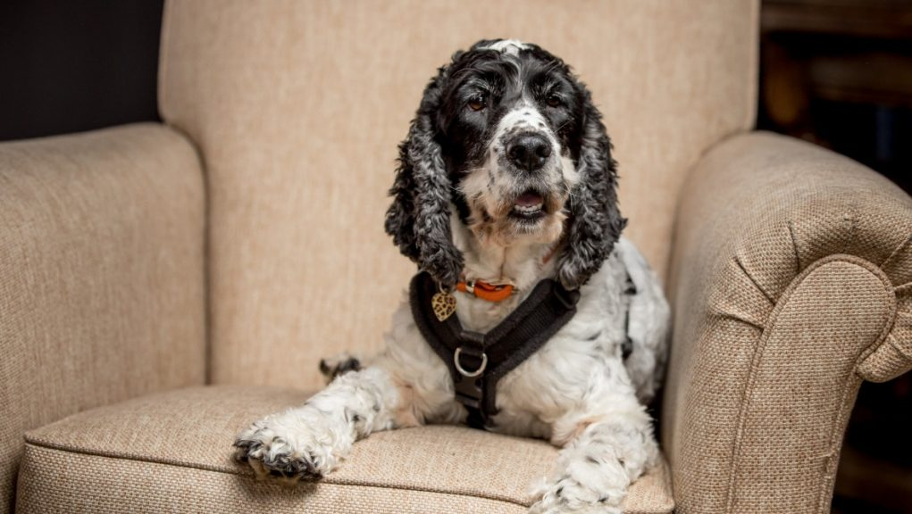 Dogs Trust: Charity appeals for volunteers. (stock image)