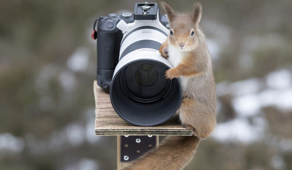 Red squirrel climbs on top of a photographer's camera.