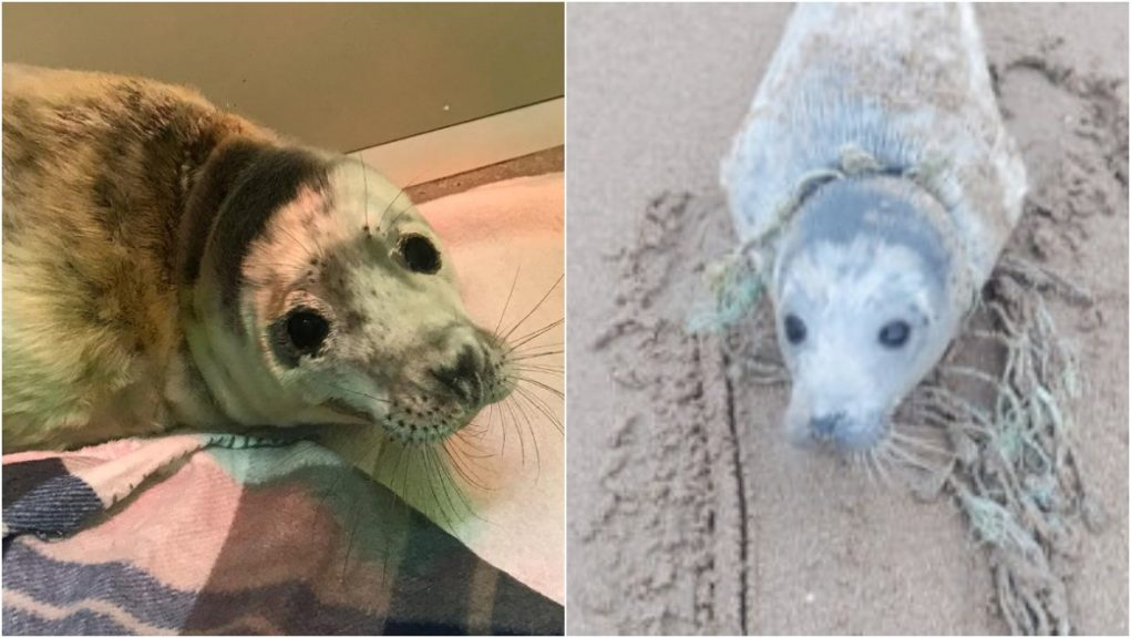 A seal was rescued after becoming tangled up in fishing rope.