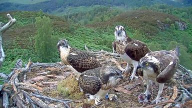 Four ospreys in the Highlands have had their names migrated to Mars by Nasa.