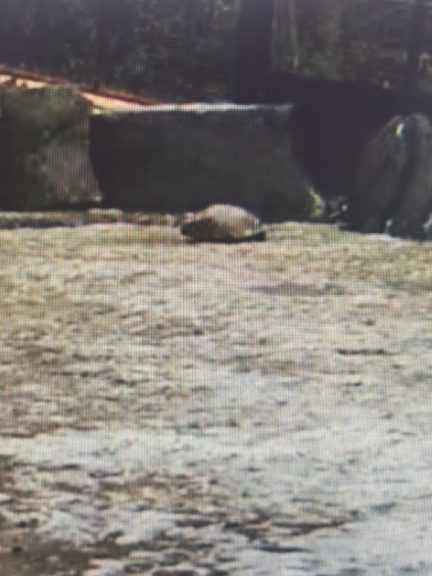 A concerned Edinburgh Zoo webcam viewer mistook a rock for an injured penguin.