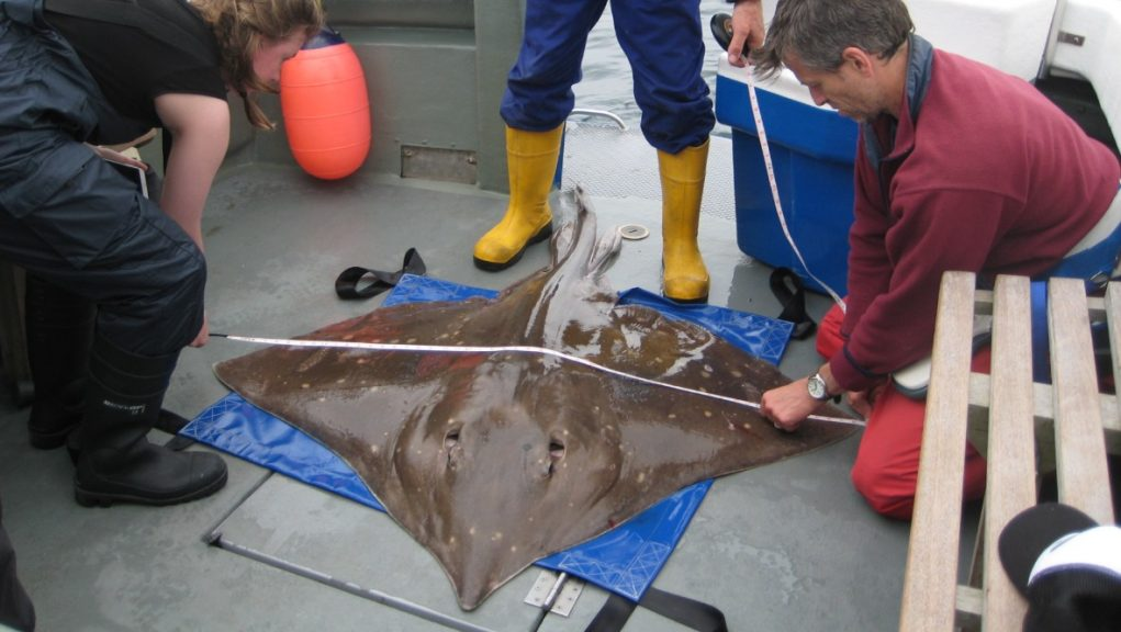 Flapper skate: A stretch of the Inner Sound of Skye has been given MPA status.
