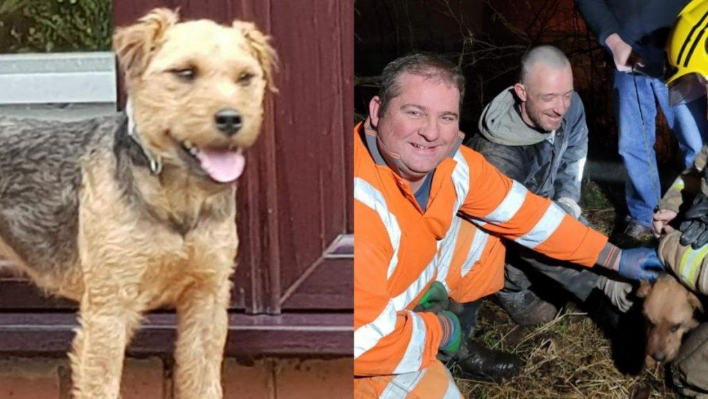 Bailey: Lakeland terrier with Drain Tek employees.