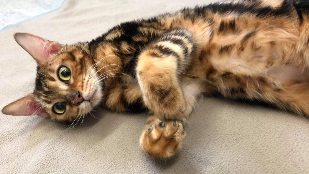 Rescue: Kitten dumped by roadside 'may be been abandoned by dealer'.
