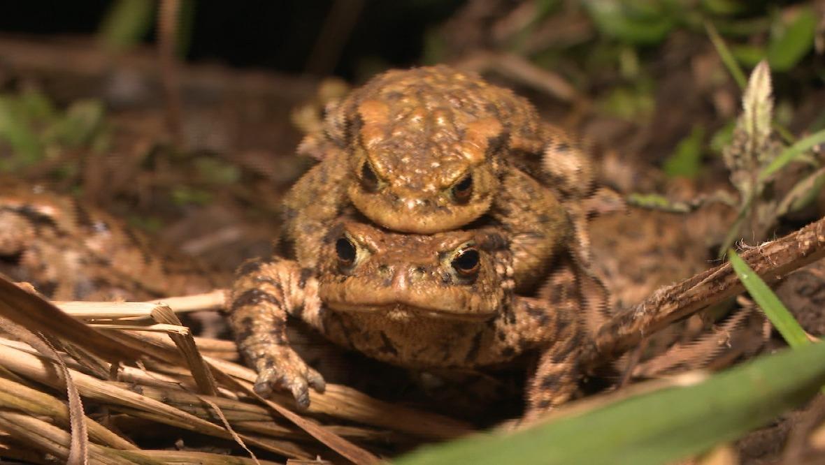 Toads.