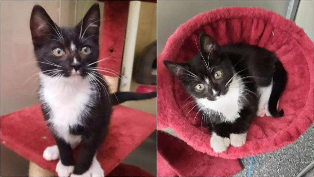 The SSPCA is appealing for information after a kitten was abandoned in Falkirk.