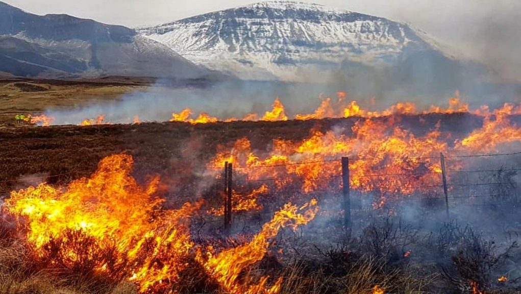 Emergency services have had to deal with several wildfires already this year.