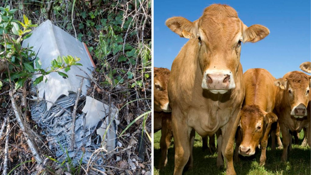 One farmer lost eight cows last year and found batteries dumped by fly-tippers in the field.