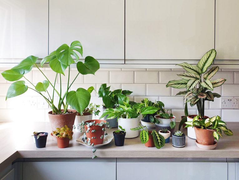 A display of Ketsuda's houseplants she has collected during the pandemic.