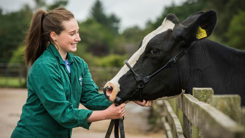 Scotland's Rural College, which already offers degrees in veterinary nursing, now plans to open a vet school.