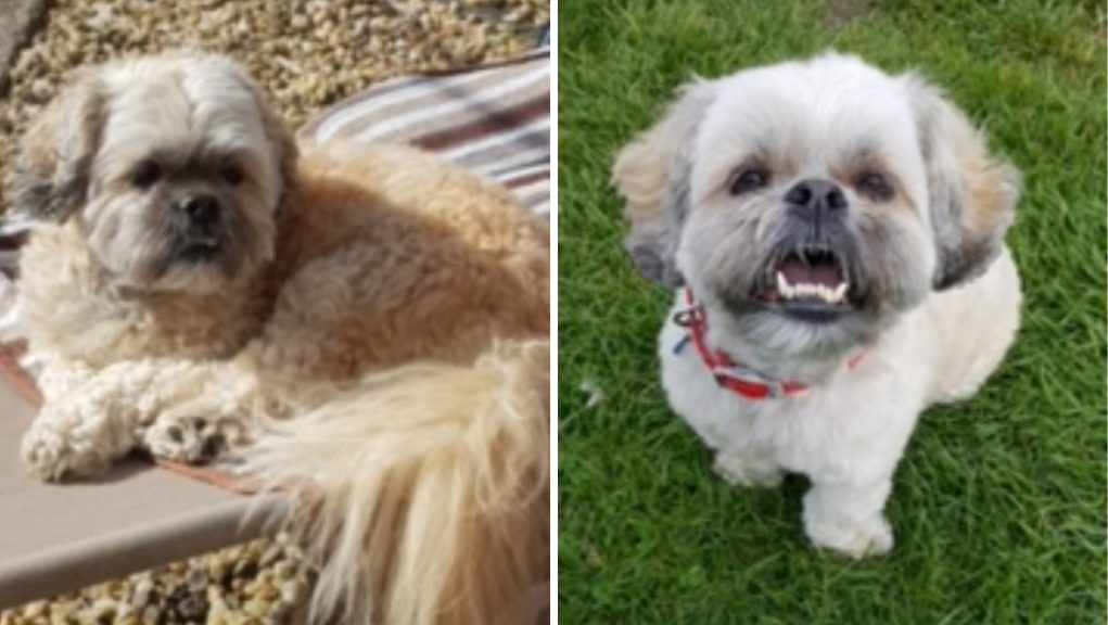 The tiny nine-year-old pooch suffered awful wounds in the attack which Ms Doherty's partner described as terrifying.