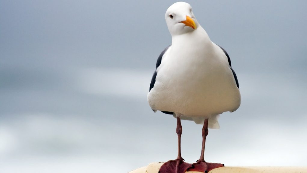 Seagull: Police have launched an investigation.