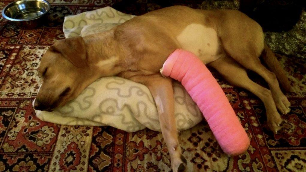 Lucy: Needs life saving surgery.
