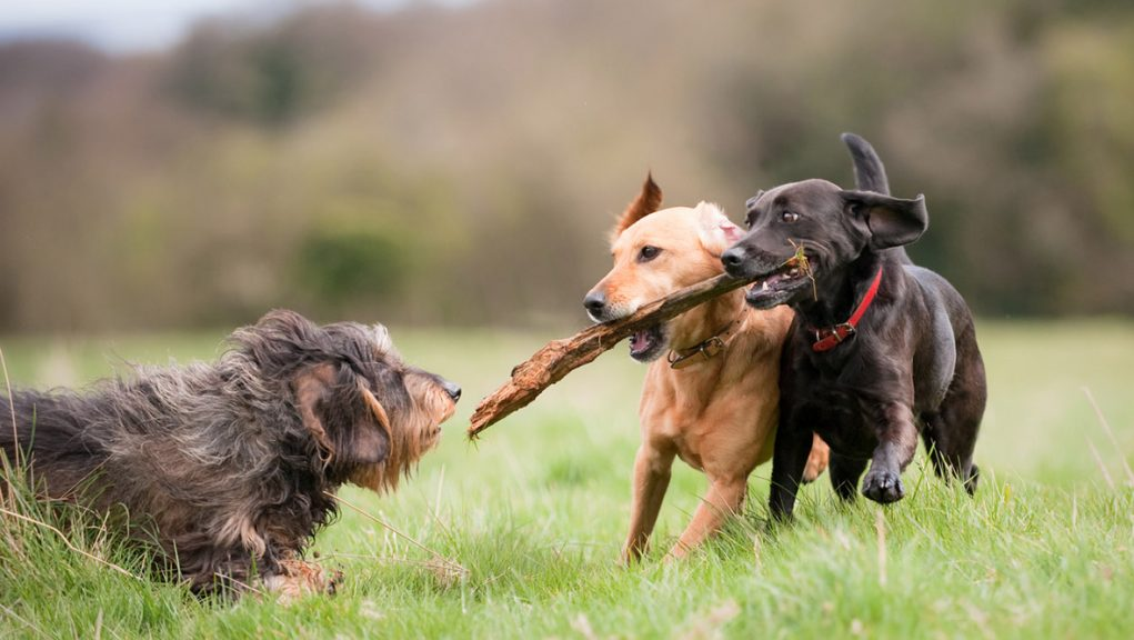 More than 138,000 people have signed petition calling for stronger penalties against dog theft in Scotland.