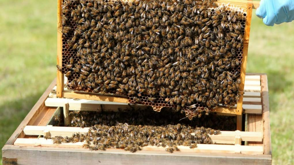 Perthshire: An infected bee colony has been destroyed.