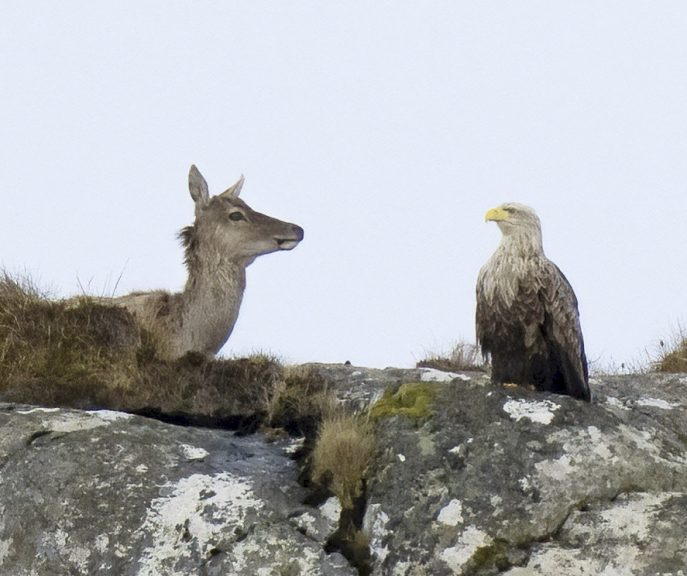 The astonishing scene was snapped on a hillside in North Uist.