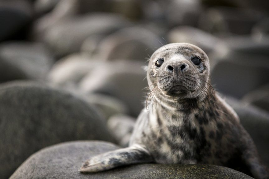 Concerns have also been raised over litter including cans and disposable barbecues posing a risk to baby seals.