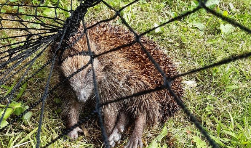 Warning: Animals injured in gardens.