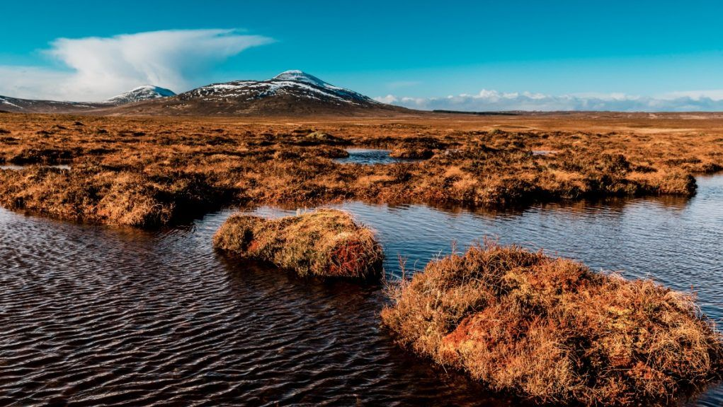 Bogs: Satellite technology could help determine the condition of Scotland's peatland.