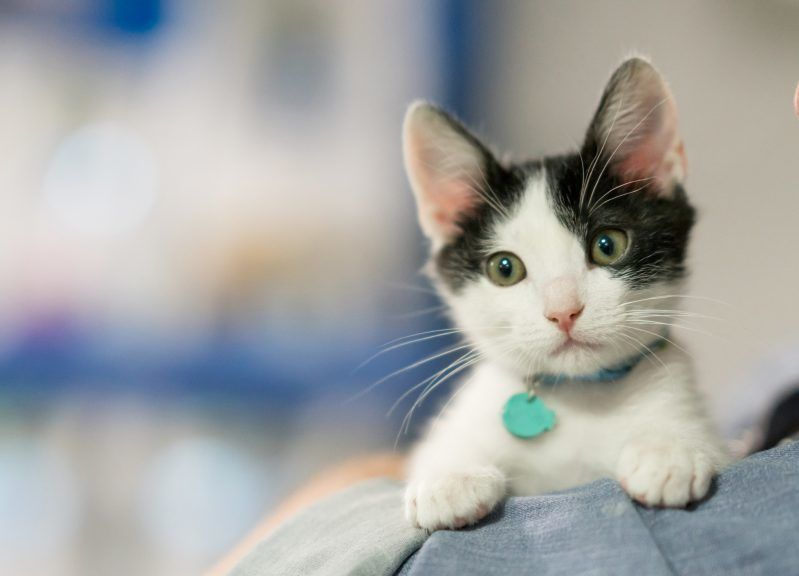 Pet ownership has exploded during lockdowns over the last year and a half.