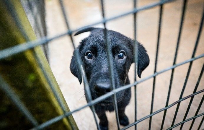 More than 66,000 dogs were commercially imported into the UK last year.