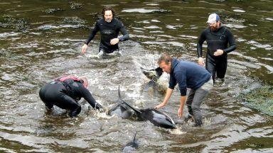 Locals and tourists jump in the water to save a pod of dolphins.