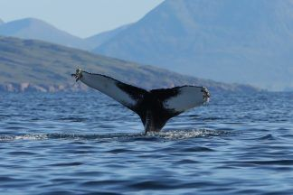A male Humpback Whale was spotted off the coast of Rona.