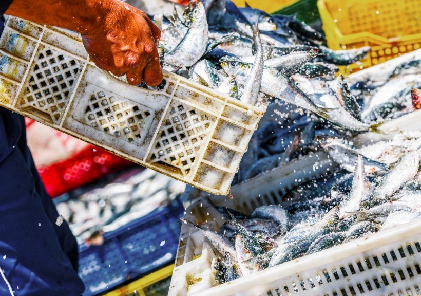 Fishing: Call for government action.