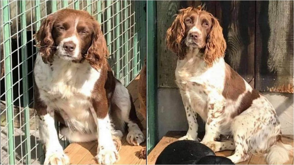 Police in Angus appealing for information over theft of dogs near Kirriemuir.