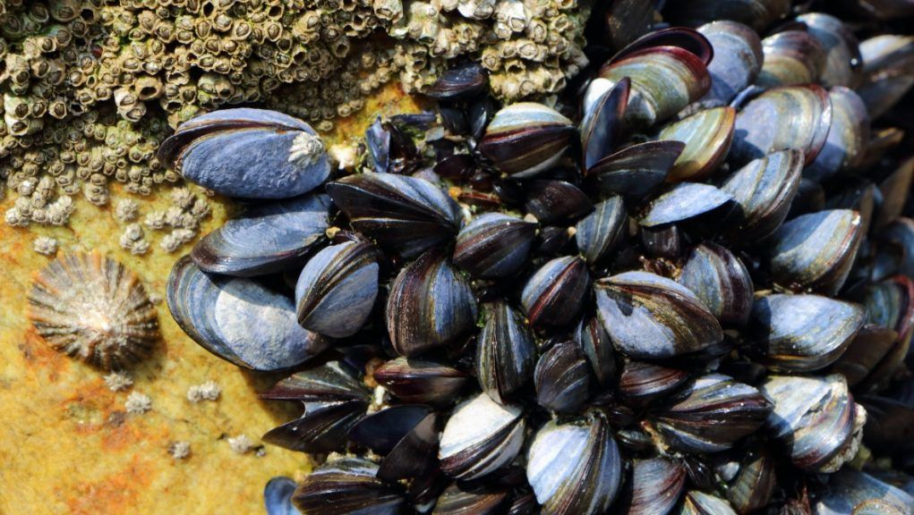 Warning: Raised levels of shellfish toxins have been identified in the Outer Hebrides.