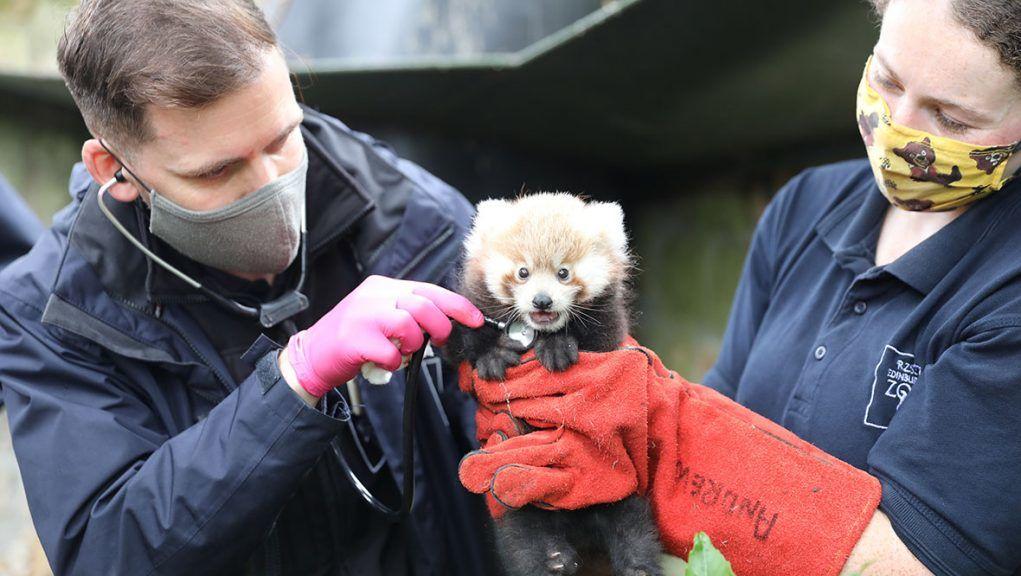 Ruby was born at Edinburgh Zoo in July.