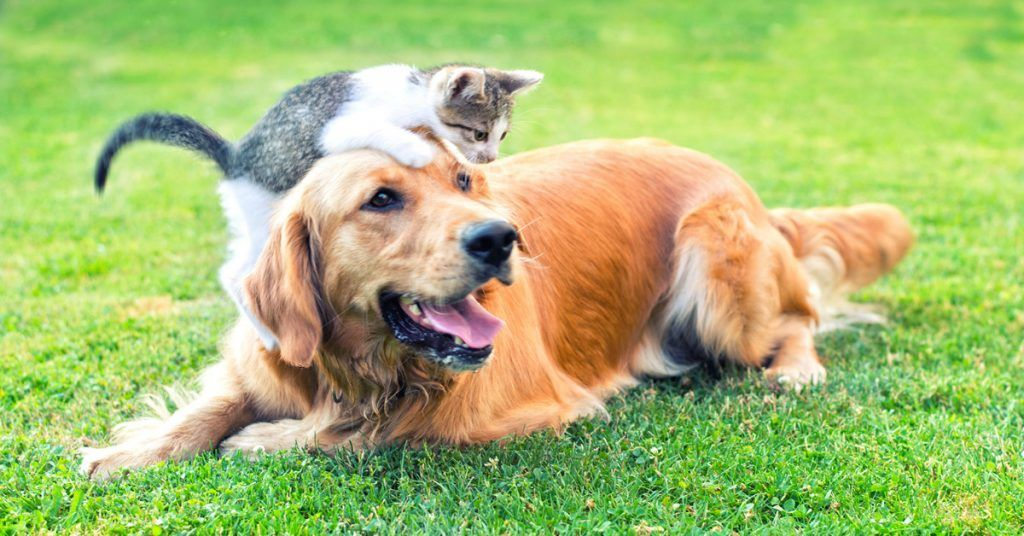 Last year, the home cared for 610 dogs and 247 cats.